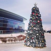 The Shaw Calgary tree. || Le sapin de Nöel à Shaw Calgary. #ShawDirect